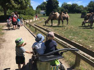 Dagplejen i Zoo